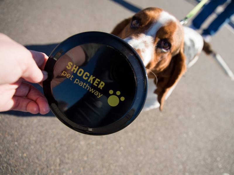 Dog with Shocker Pet Pathway branded frisbee