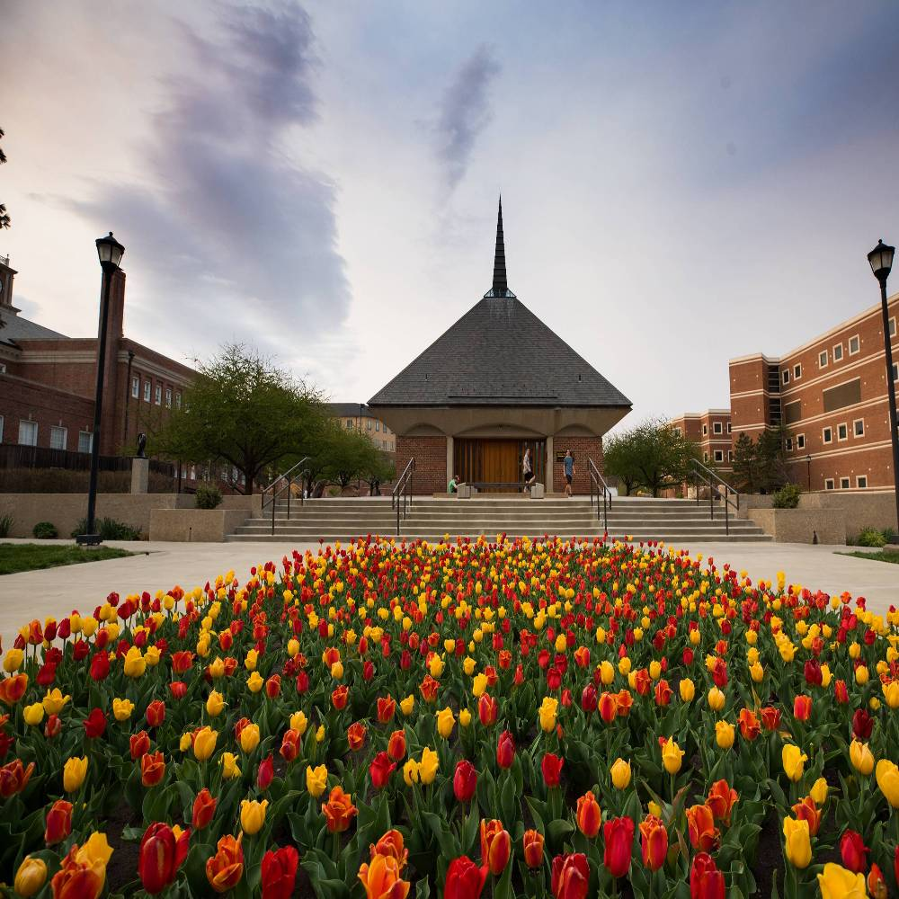 Tulips planted infront of Grace Memorial Chapel.
