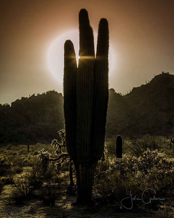 Photo of a cactus in a desert with the sun setting behind it.