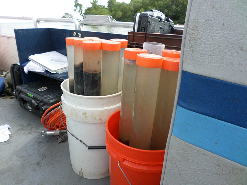 Blue-green algae samples taken from Marion Lake.