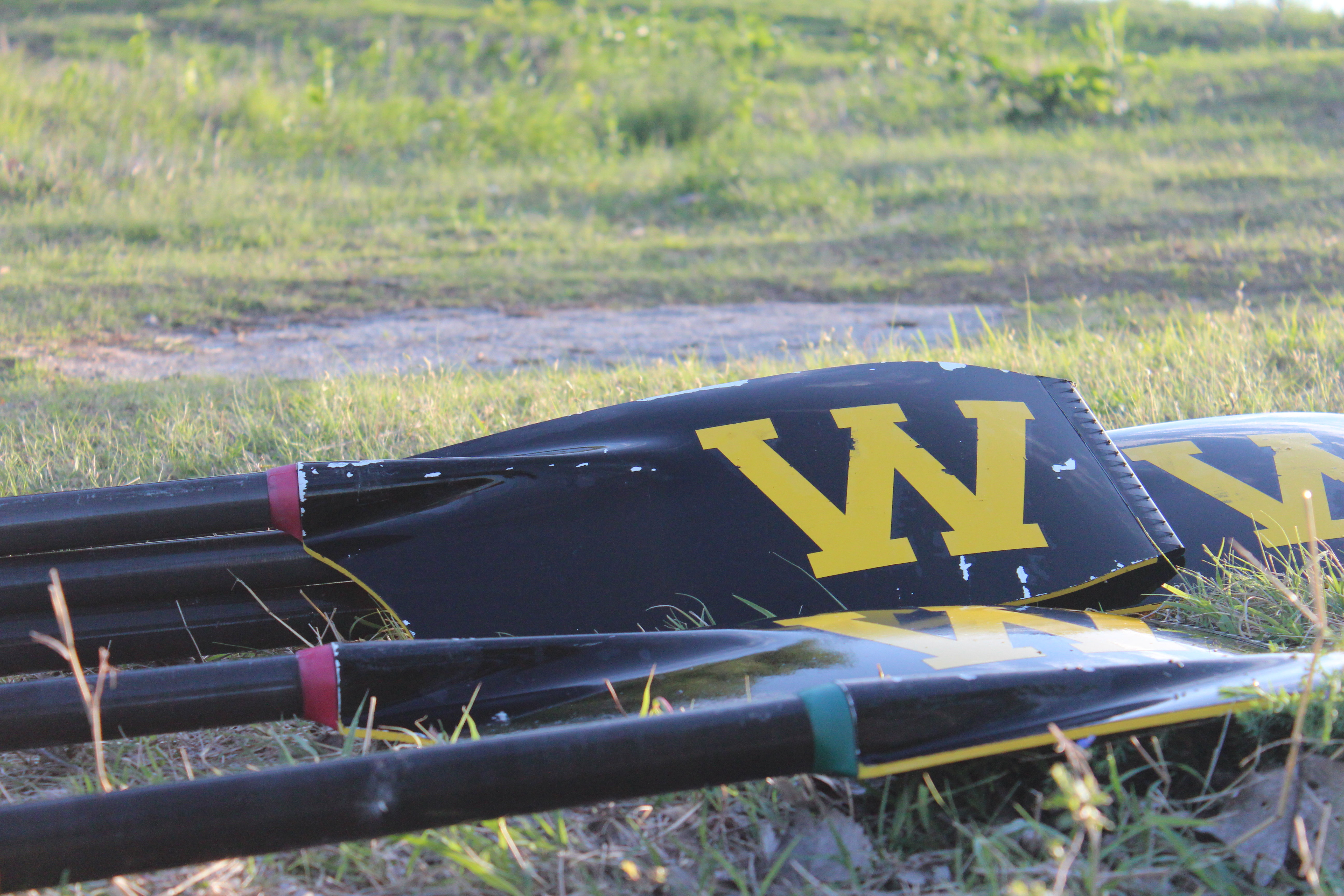 closeup of oars on grassy ground. The yellow W is prominent on the black blade.