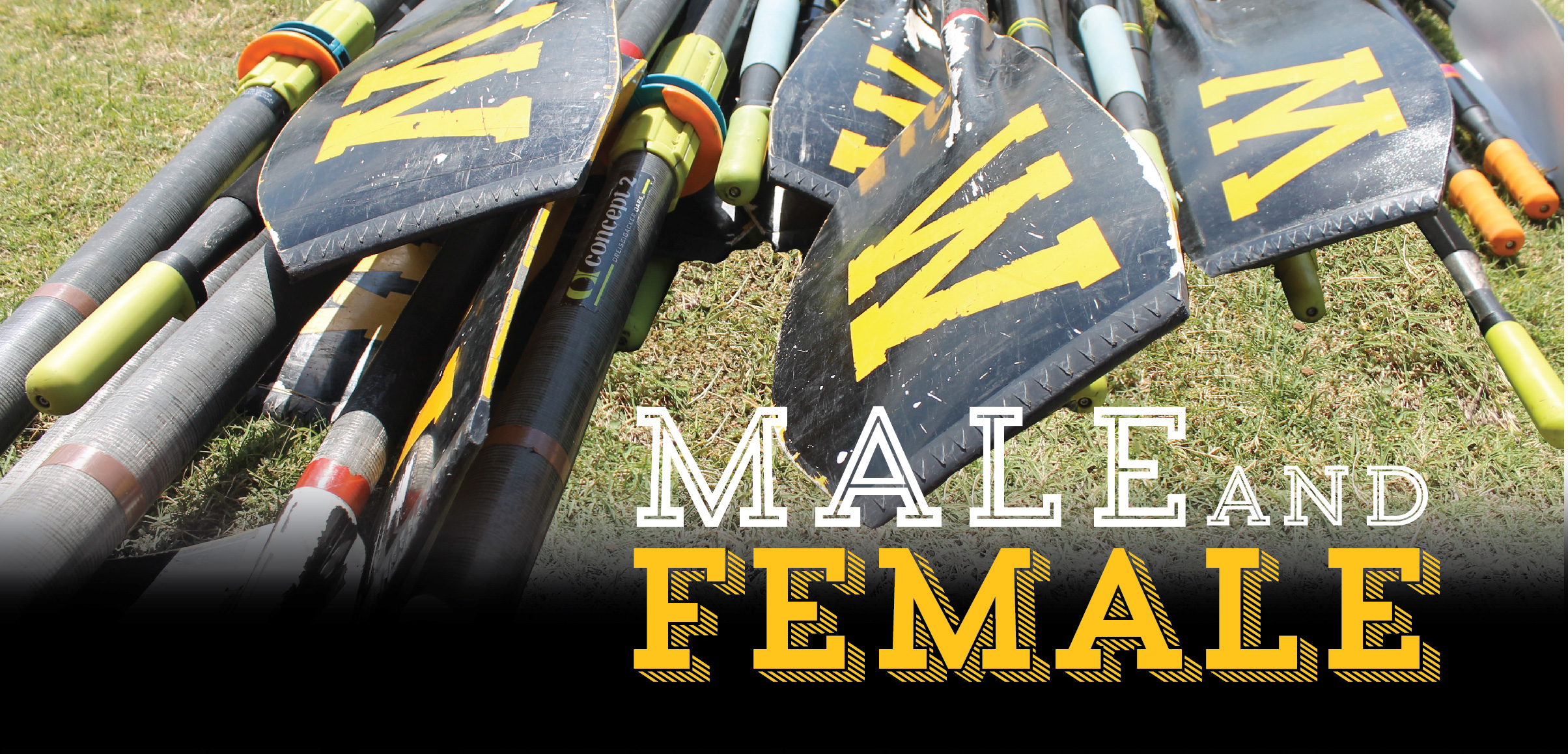 "Oars with words ""male and female:"" in white and yellow text"