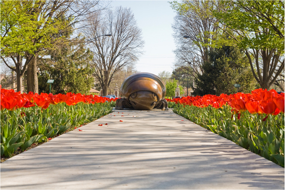 Photo: Red tulips with beetle sculpture