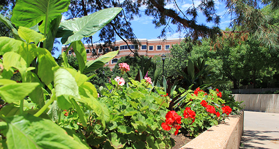 Flower beds by Ablah Library with Jabara Hall in the background